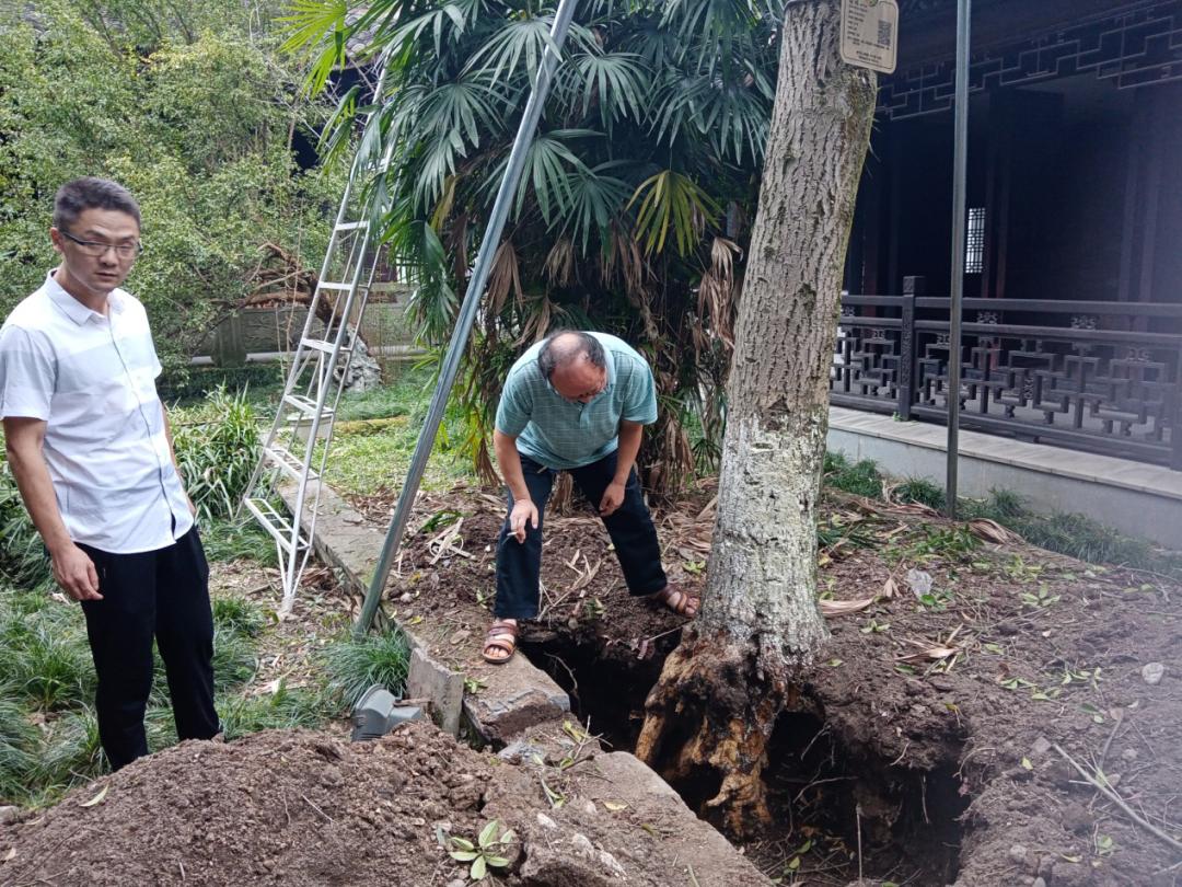 名木古树抢救更好的保护自然遗产