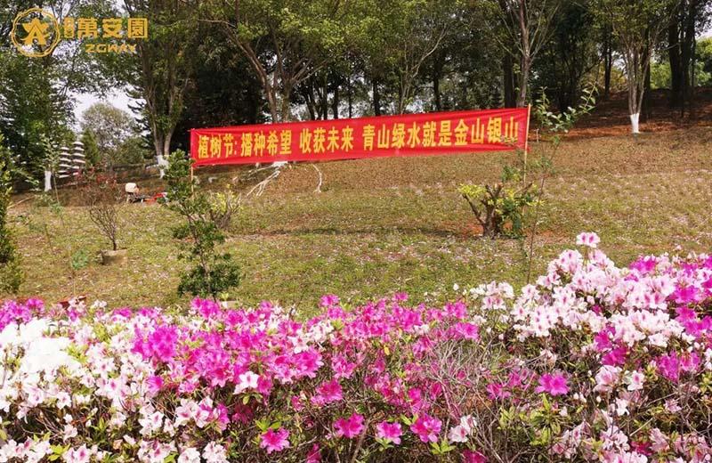 2植树节、播种希望,收获未来。.jpg