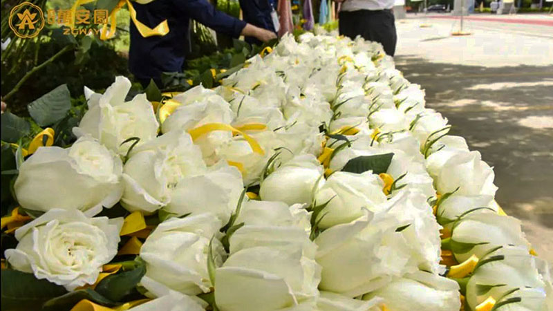 4清明祭 · 万朵鲜花祈福