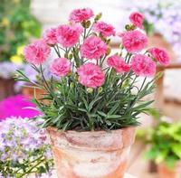 家庭花卉养殖方法介绍