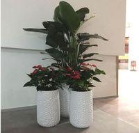 摆花的技巧有哪些 客厅适合摆什么样的花