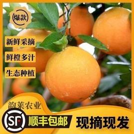 湘西脐橙保靖黄金橙新鲜水果大果埃及当季整箱甜橙湖南榨汁非进口