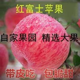 【包邮】烟台红富士苹果正宗当季山东新鲜水果整箱现摘批发3斤5斤10斤脆甜  价格:11.80元  券后价:4.80元
