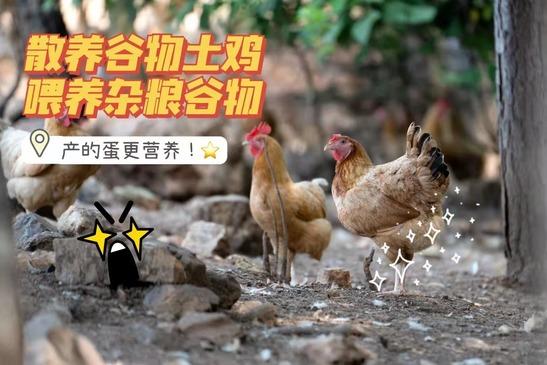 农家土鸡蛋