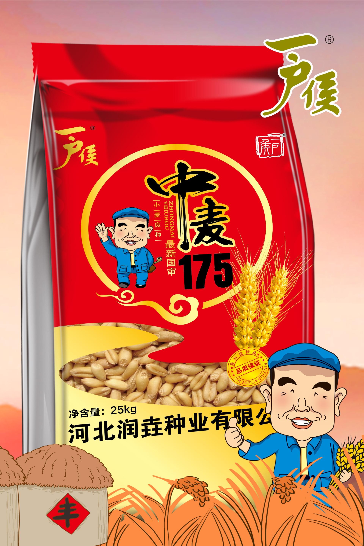 中麦175