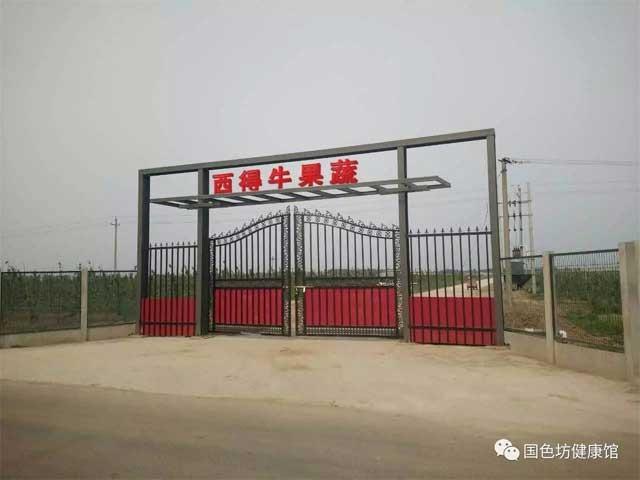 河北兴泰果蔬现代农业园