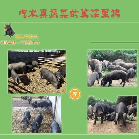 散养冀深黑猪火热预定(预计4月份上市)