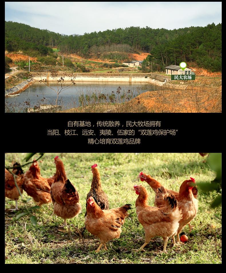 鸡肉详情4