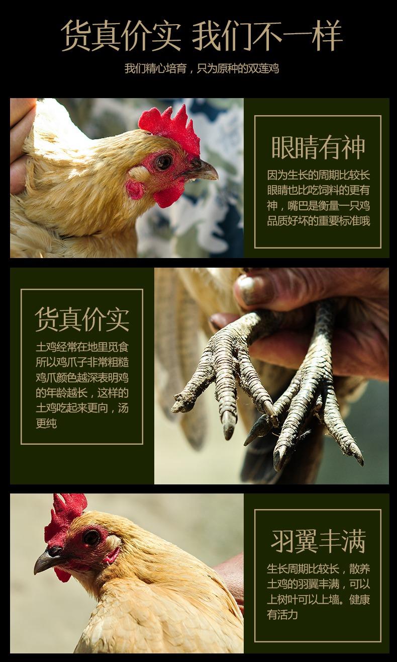 鸡肉详情6