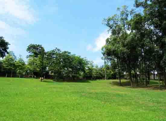 公園--市政園林綠化