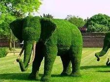 动物绿植绿雕