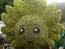 植物造型绿雕