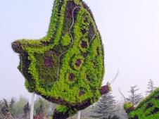 蝴蝶造型綠雕