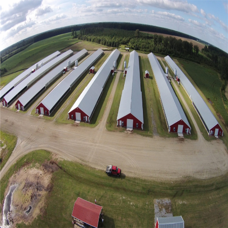 Prefabricated Steel Structure Poultry Farm Livestock House