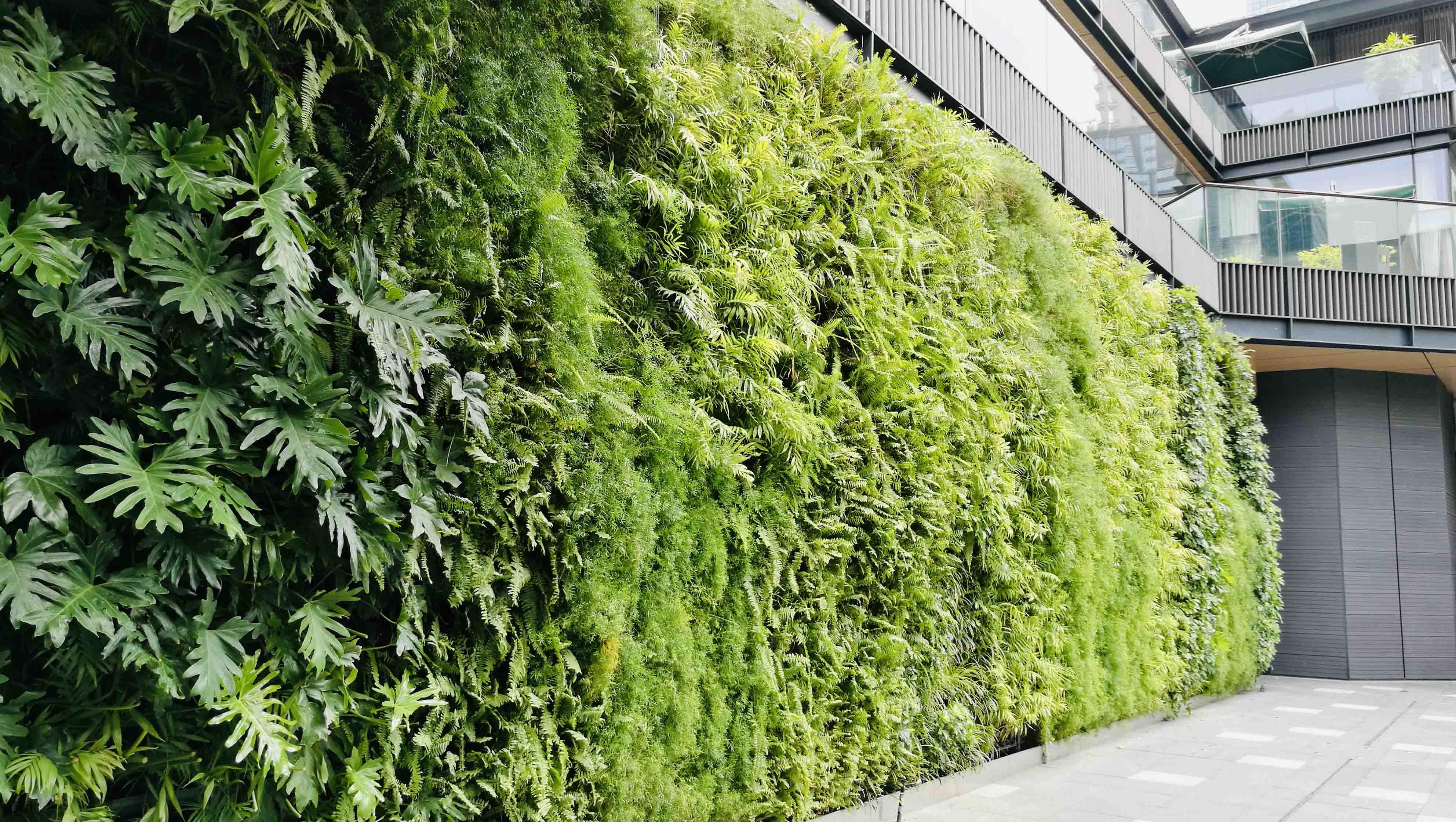 太古里绿墙-养护 (2)