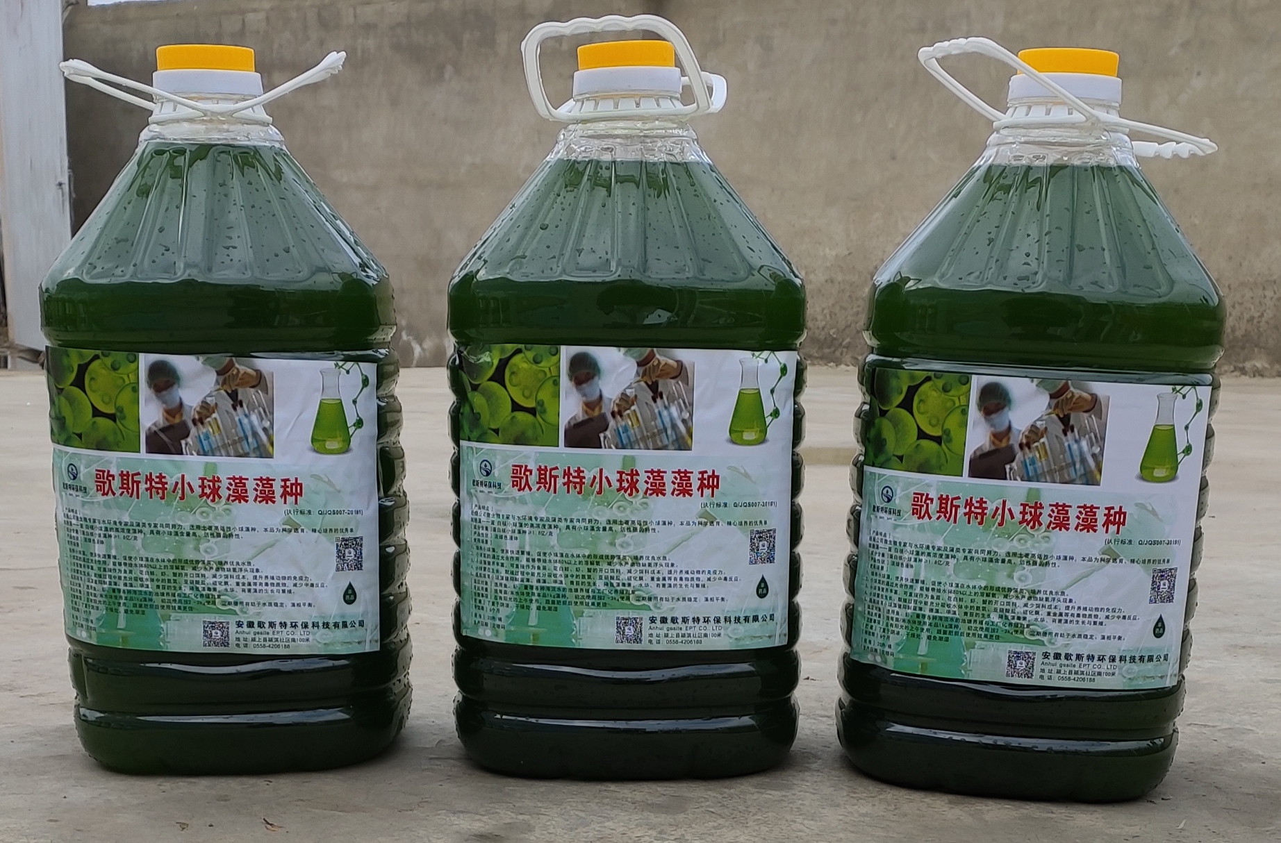 水产小球藻是什么