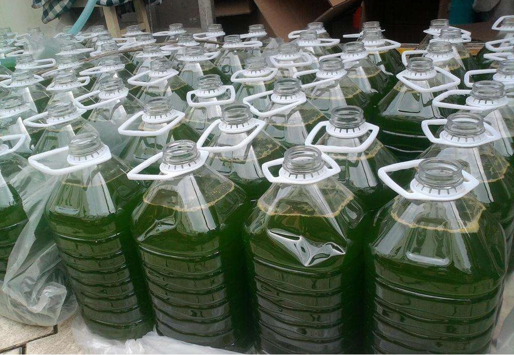 小球藻系列