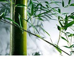 为什么要用竹纤维布艺制作卫生巾?