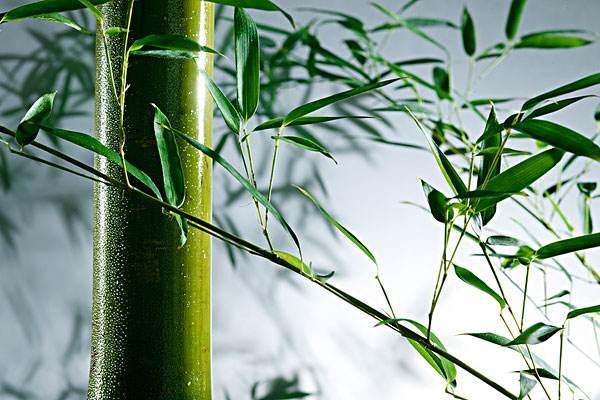 竹纤维卫生巾
