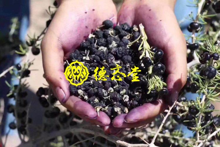 黑枸杞 青海柴达木 野生 诺木洪花青素之王20g/瓶