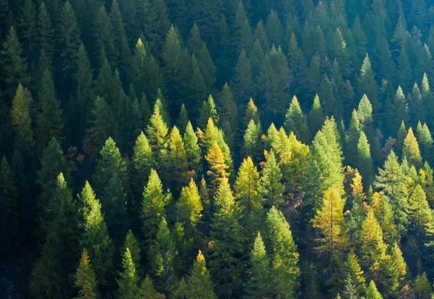 森林覆盖率将提高到24.1% 生态安全屏障更加牢固