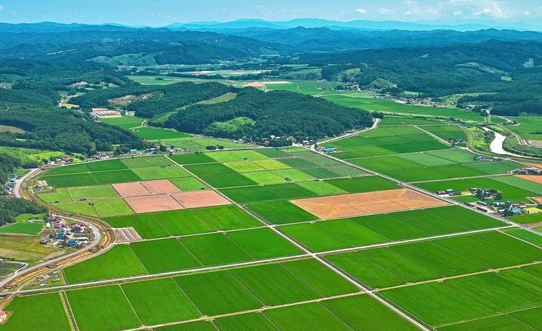 高標準農田