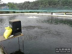 泥鳅养殖有什么优势?
