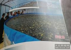 一个大圆桶产鱼3万斤 这样的大谷桶能养泥鳅吗?
