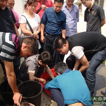 泥鳅养殖技术培训
