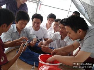 泥鳅苗繁殖技术培训