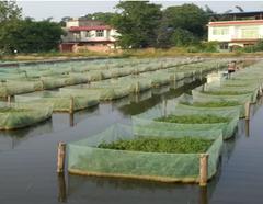 简阳市大众养殖有限责任公司生态黄鳝繁养基地简介