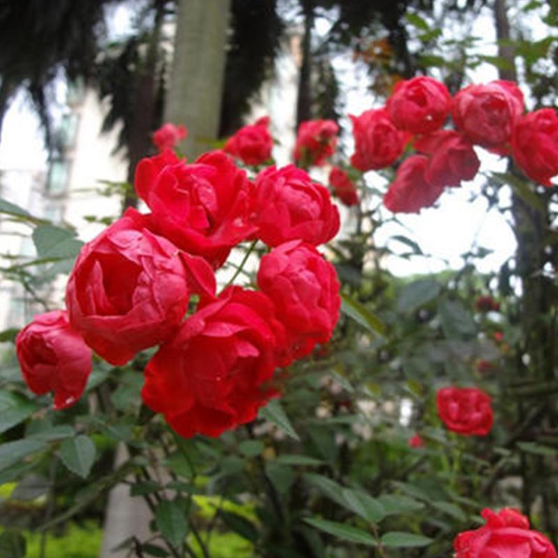 盆花,插竹杆,小青杆,网片.花柱,花瓶,树桩,花球60-80-120老板...
