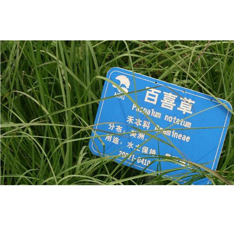 百喜草种子