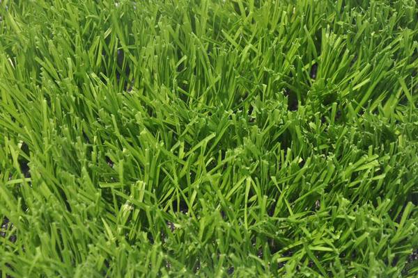 足球场自制草