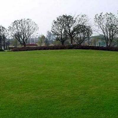 公园景观草坪