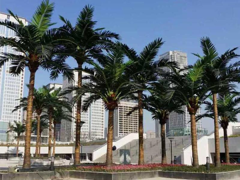 武汉华侨城椰子树