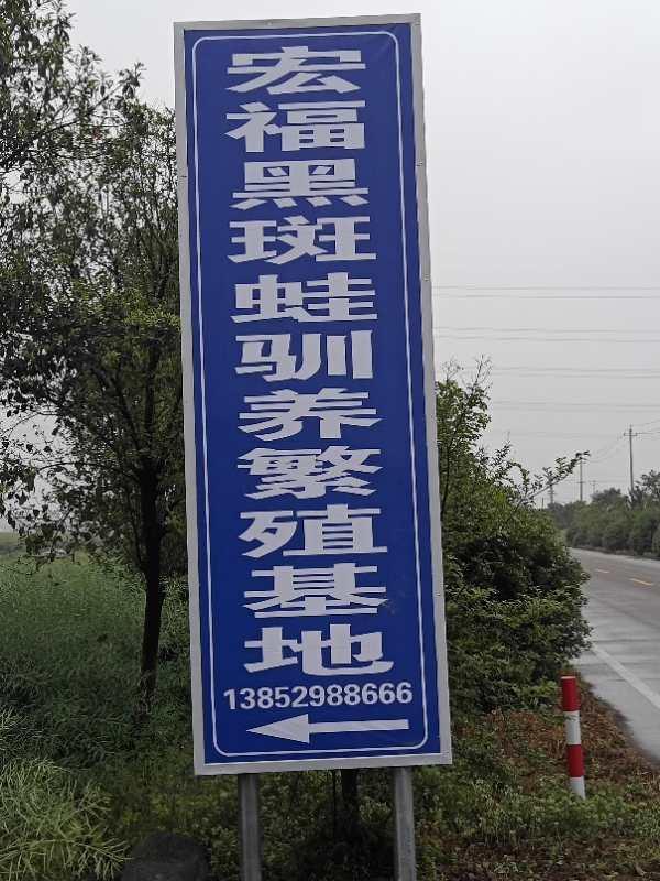 辛丰宏福黑斑蛙养殖基地