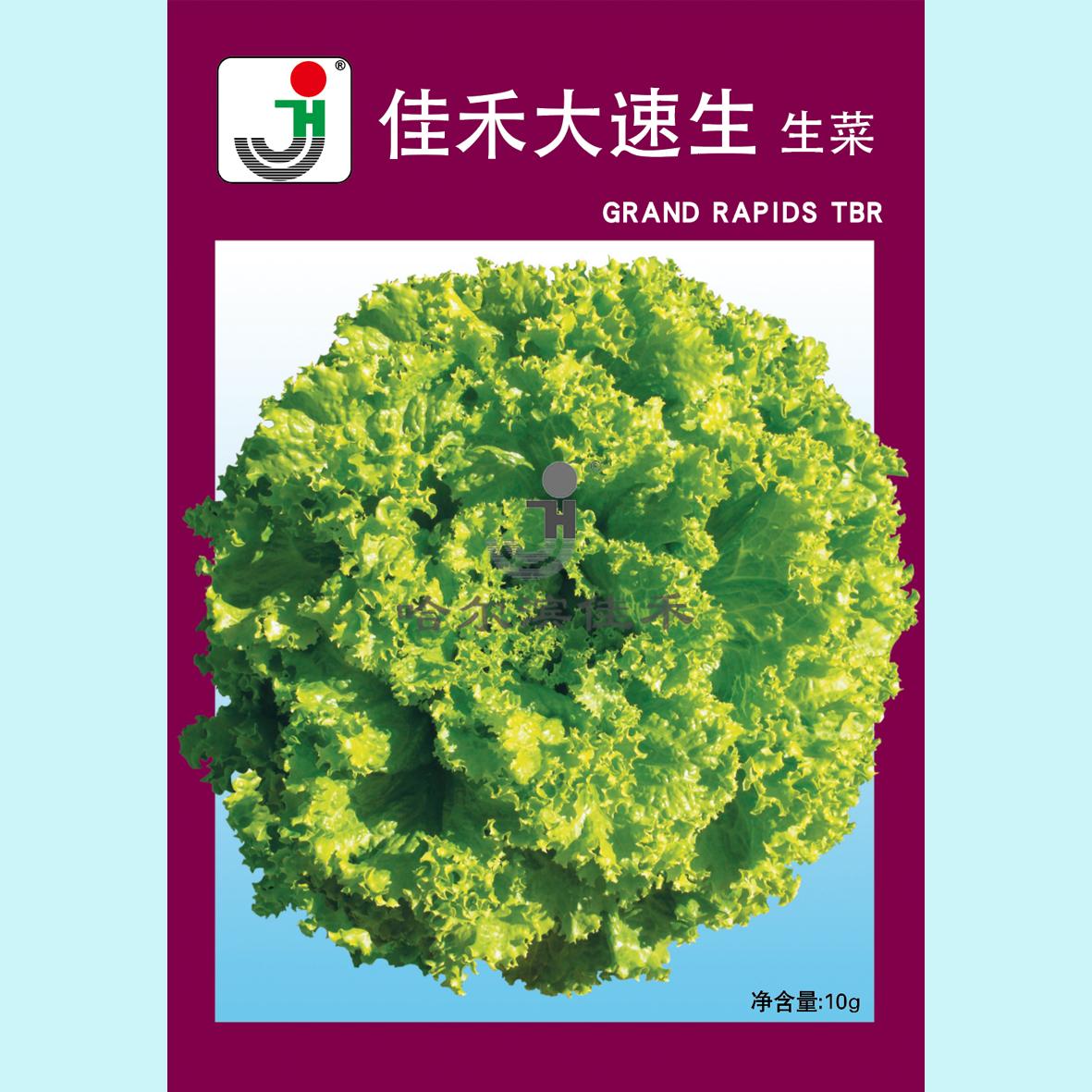 佳禾大速生-生菜
