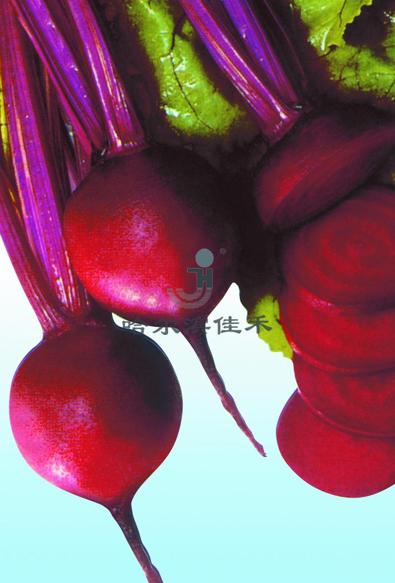 红甜菜单粒种