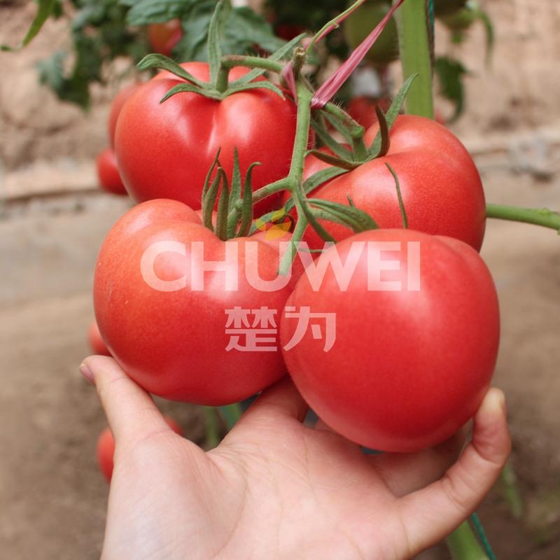 Chu Fen 8A05