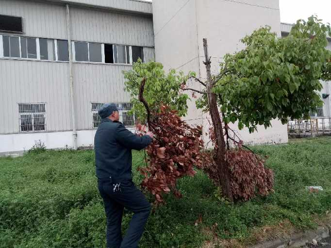 淮南分公司保安清理殘枝斷木