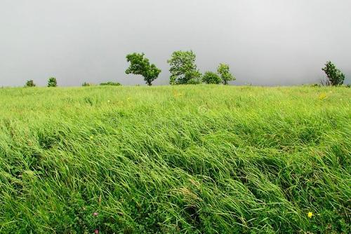 冬季景观绿化管理要点是怎么样的?