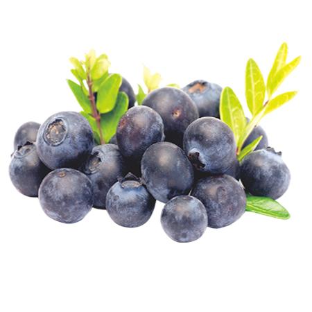 (复制900149)Blueberry